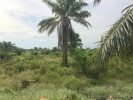 thumb_18314_1land3.jpg